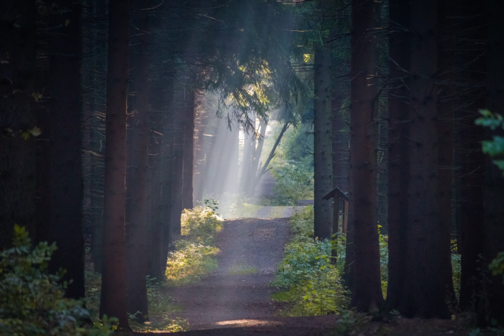 Forest with sunrays