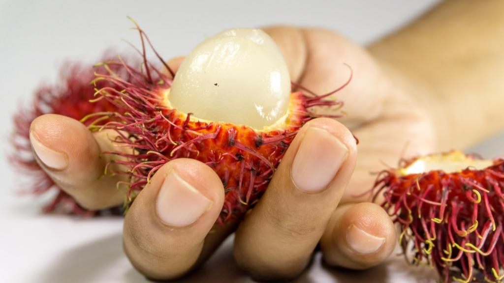 Rambutan fruit held in hand
