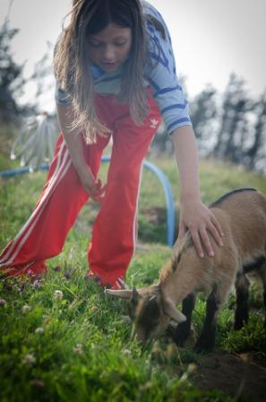 Girl touches goat
